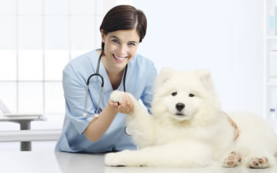 Dog Vacination Vet Australia