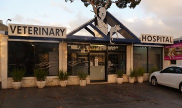 Central Veterinary Hospital Sandringham - Vet Australia