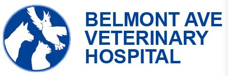 Belmont Avenue Veterinary Hospital - Vet Australia