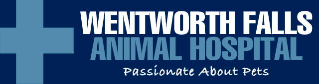 Wentworth Falls Animal Hospital - Vet Australia