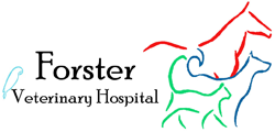 Forster Veterinary Hospital - Vet Australia