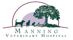 Manning Veterinary Hospital - Vet Australia
