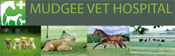 Mudgee Veterinary Hospital - Vet Australia