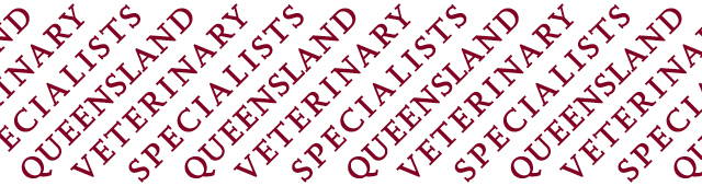 Queensland Veterinary Specialists