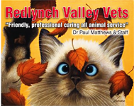 Redlynch Valley Vets